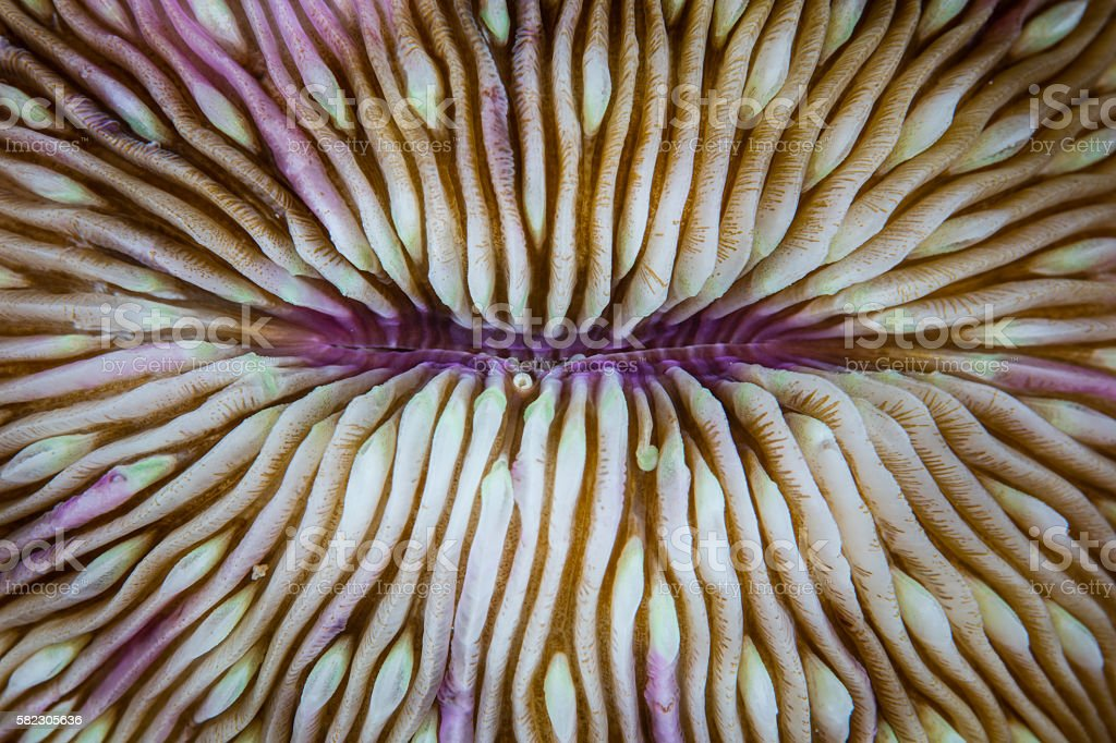 Mushroom Coral Abstract stock photo