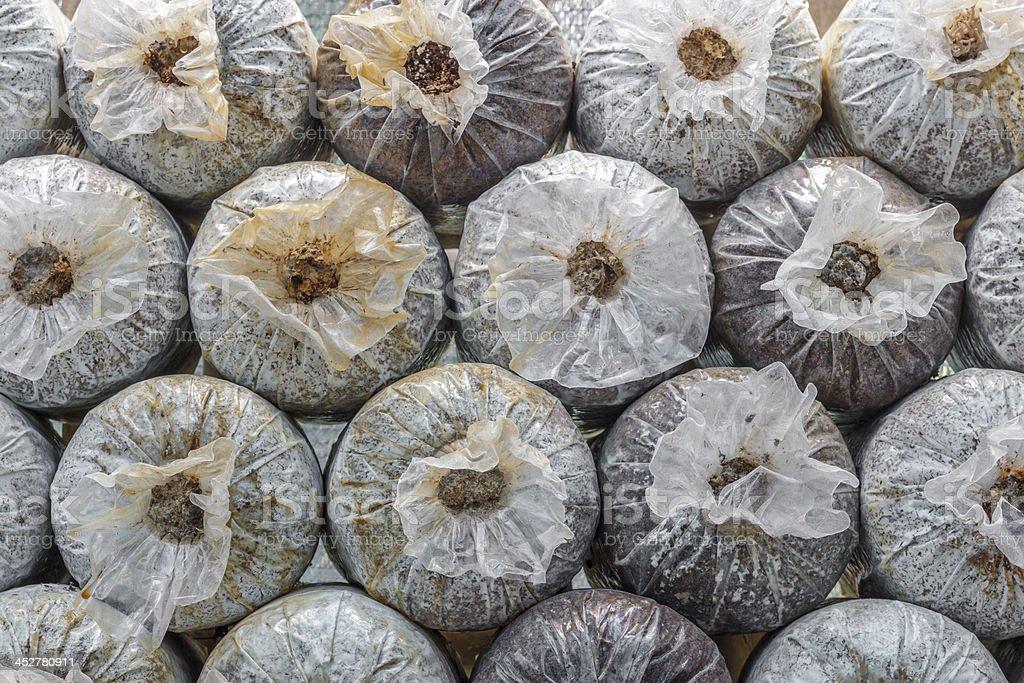 mushroom farm royalty-free stock photo