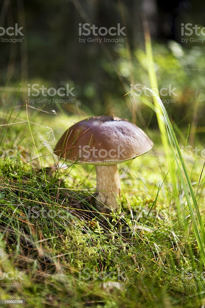 Mushroom Foray stock photo
