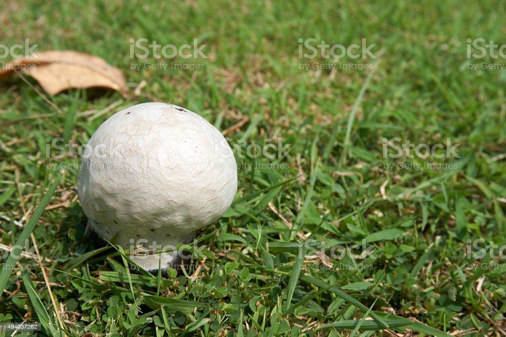 Mushroom germinate on ground with grass stock photo