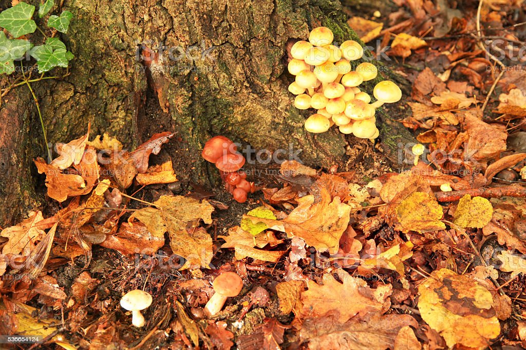 Mushroom in Autumn Forest stock photo