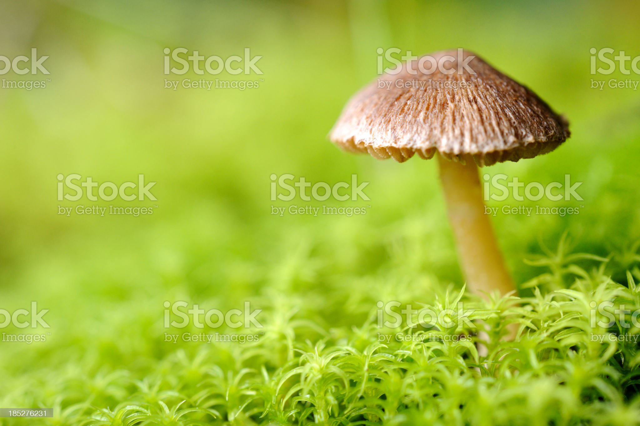Mushroom in forest royalty-free stock photo