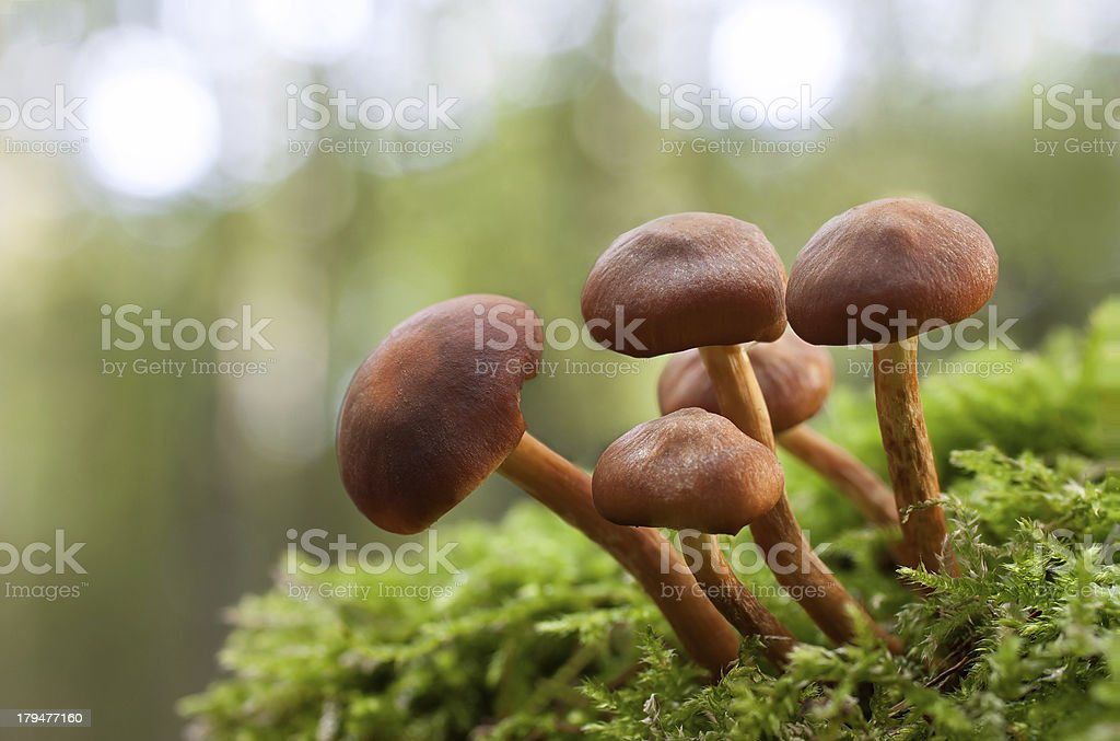 mushroom in green moss royalty-free stock photo