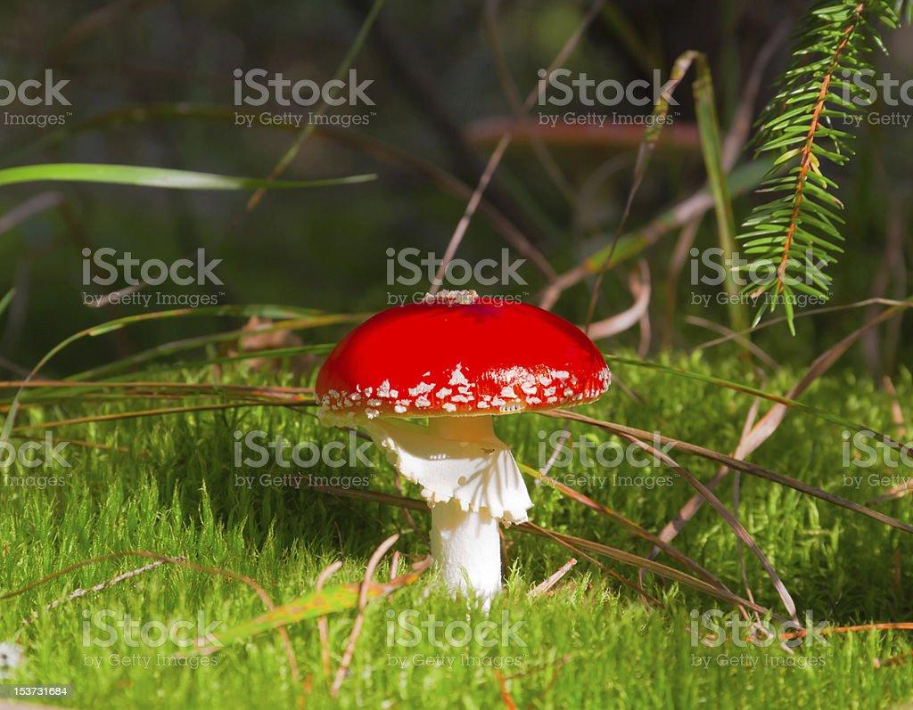 mushroom in moss royalty-free stock photo