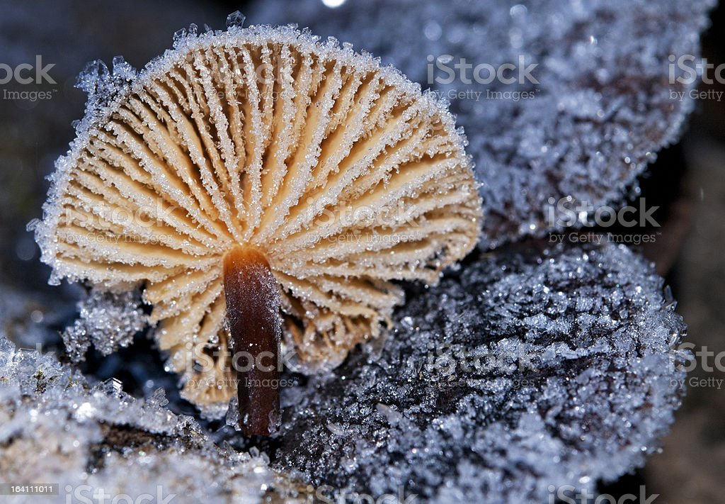 Mushroom in sparkling hoarfrost. royalty-free stock photo