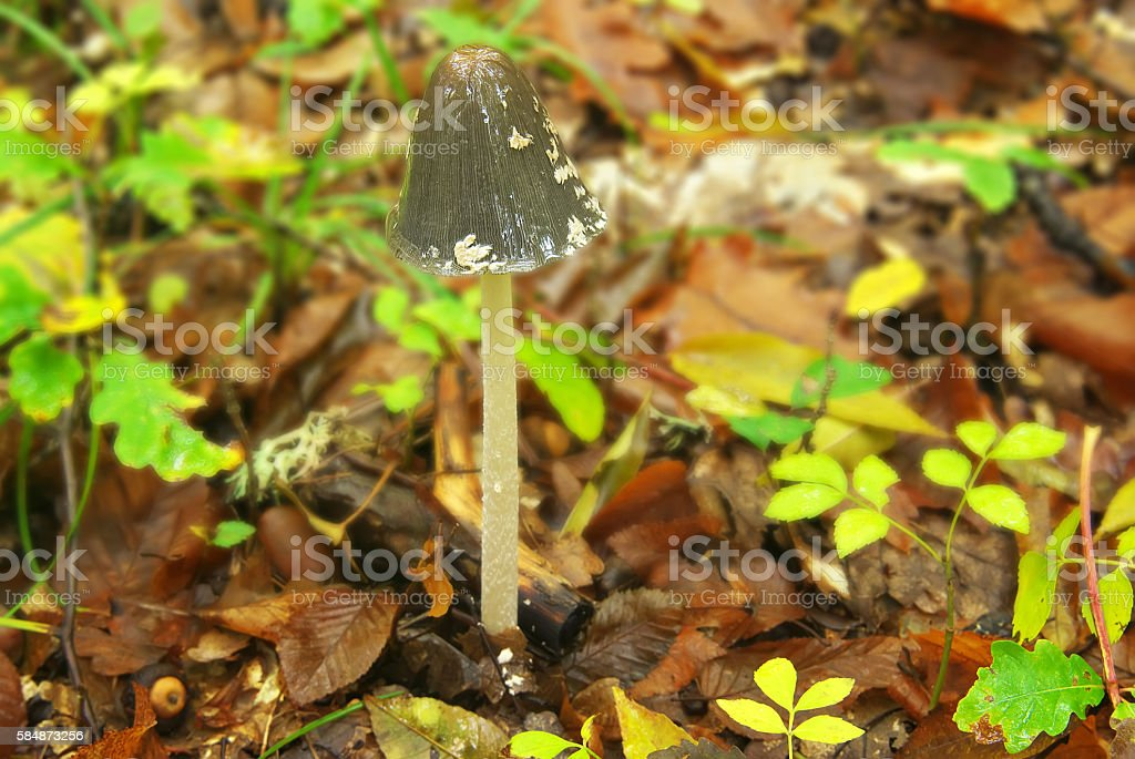 Mushroom in the autumn forest stock photo
