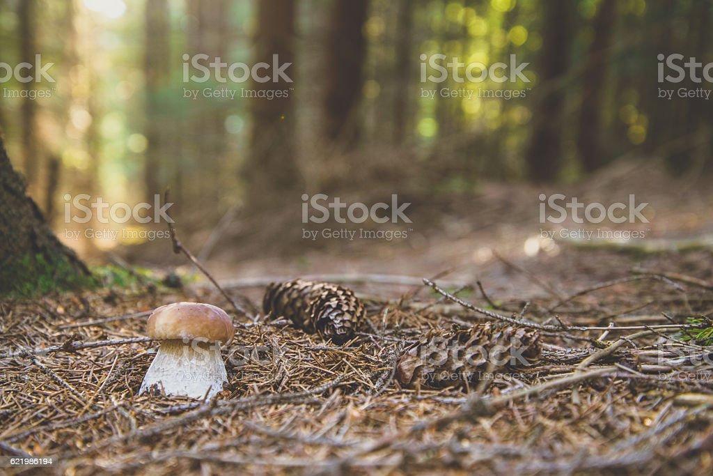 mushroom in wood stock photo