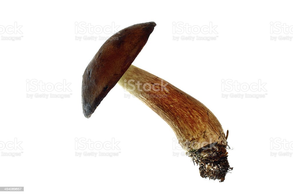 Mushroom isolated stock photo