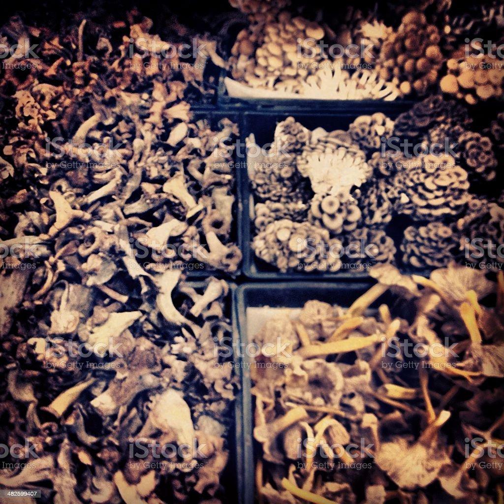 Mushroom Melange stock photo