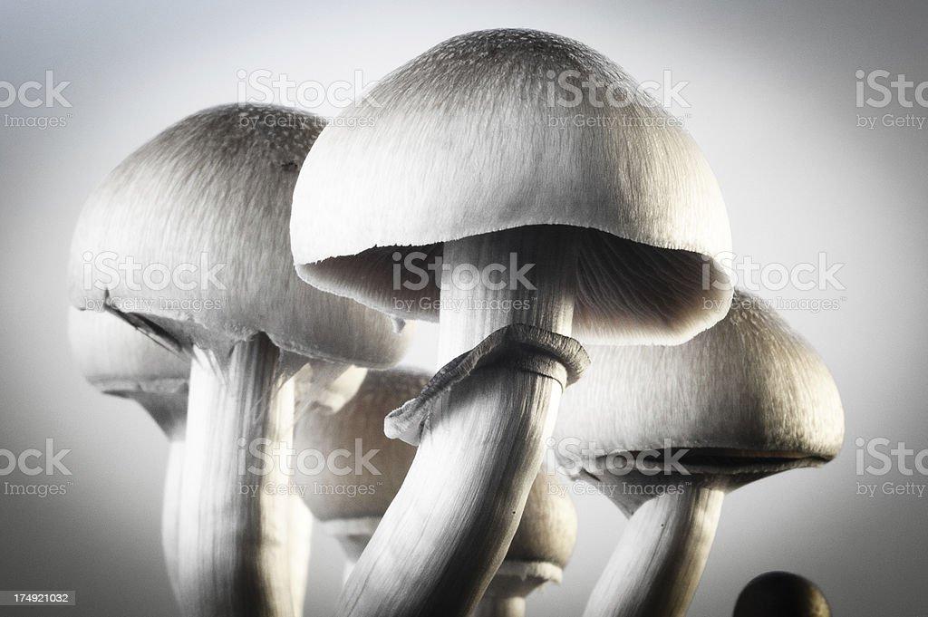 mushroom morning stock photo