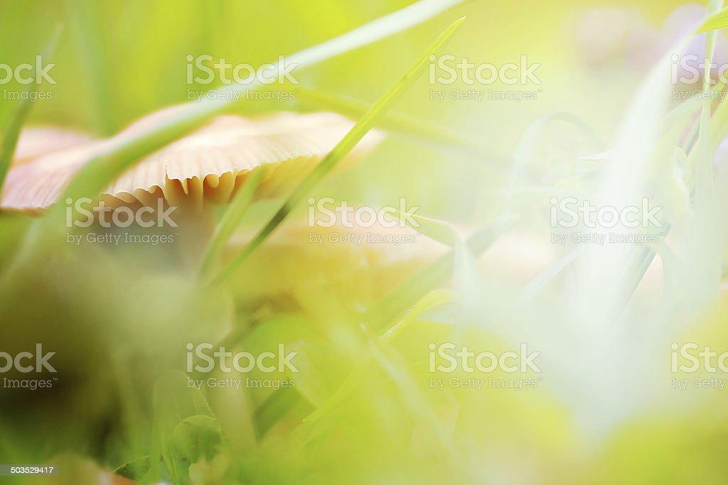 Mushroom nature background stock photo