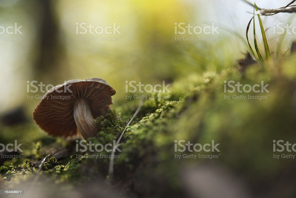 mushroom on a mossy hill royalty-free stock photo