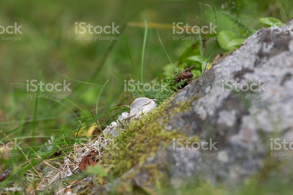 Mushroom on a stone royalty-free stock photo