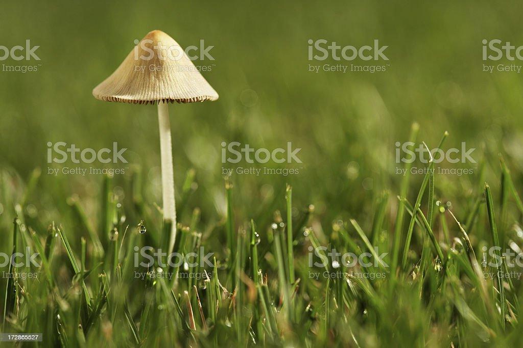 Mushroom on Grass stock photo