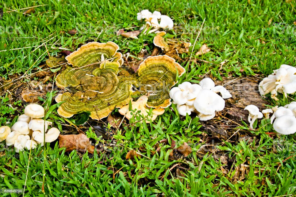 Mushroom on the ground stock photo