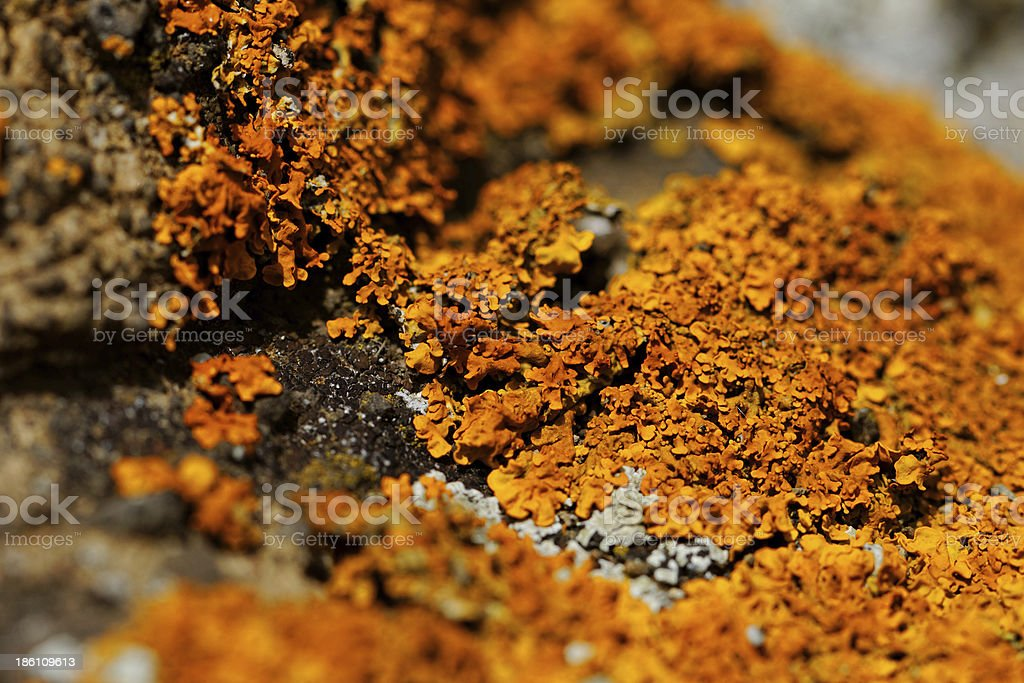 mushroom on the rocks stock photo