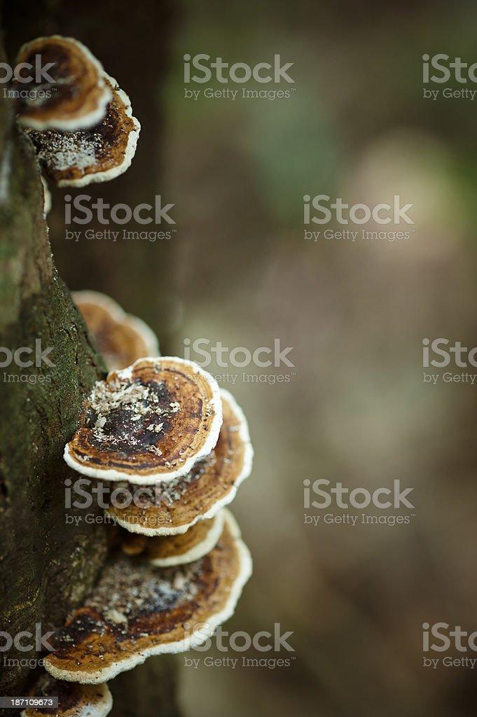 Mushroom on Tree stock photo