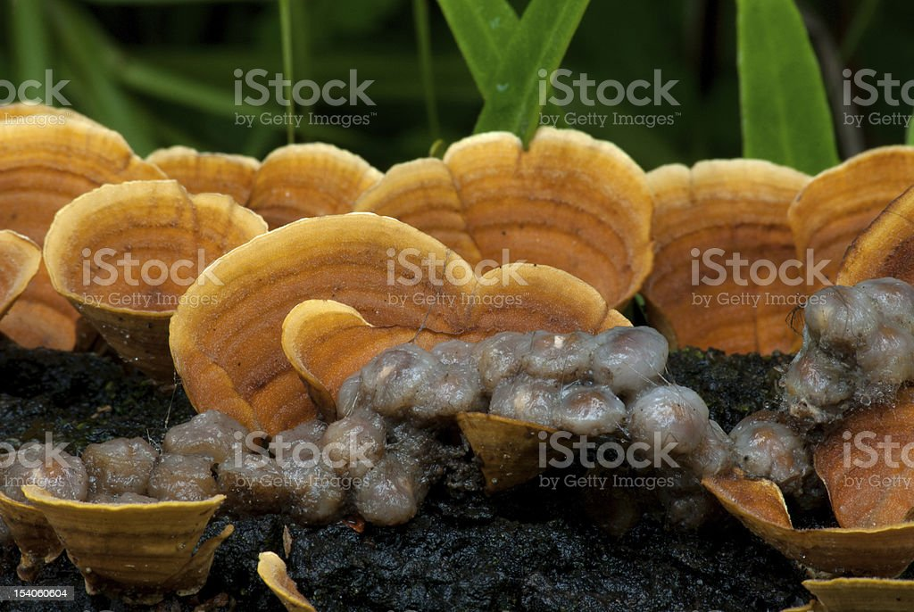 Mushroom. royalty-free stock photo