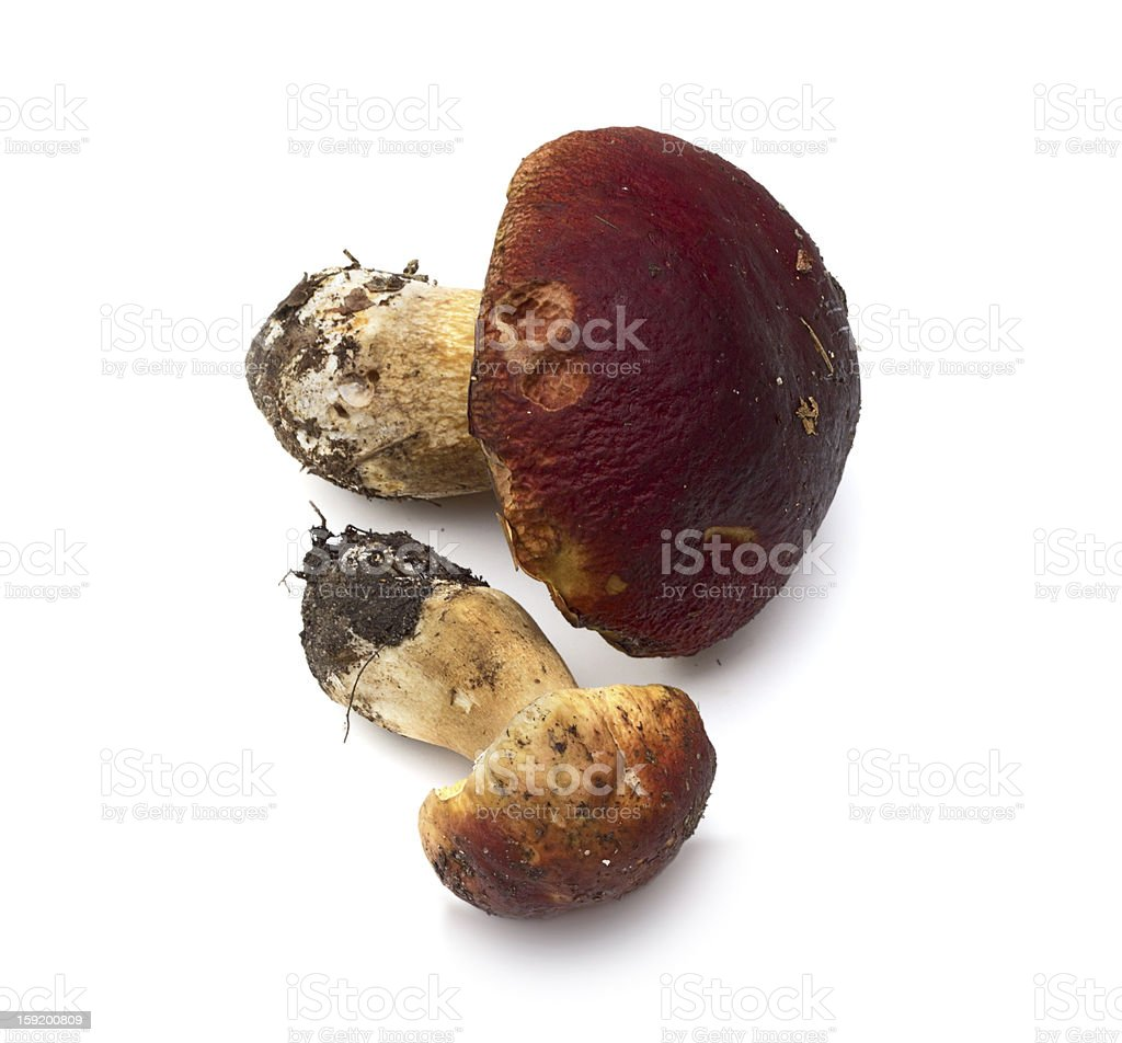 Mushroom (Boletus edulis) - porcini on white background royalty-free stock photo