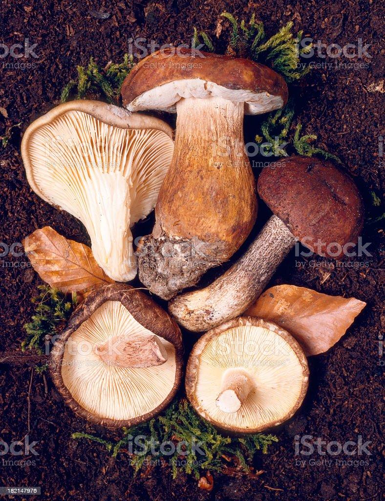 Mushroom selection stock photo