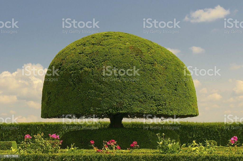 mushroom shaped tree stock photo