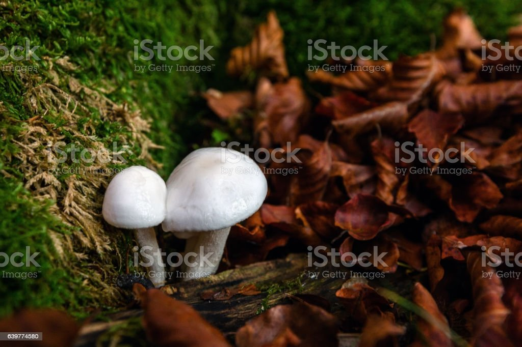 mushroom. wild. stock photo