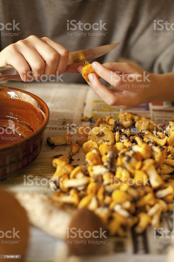 mushroom  yellow Chanterelle fungus royalty-free stock photo