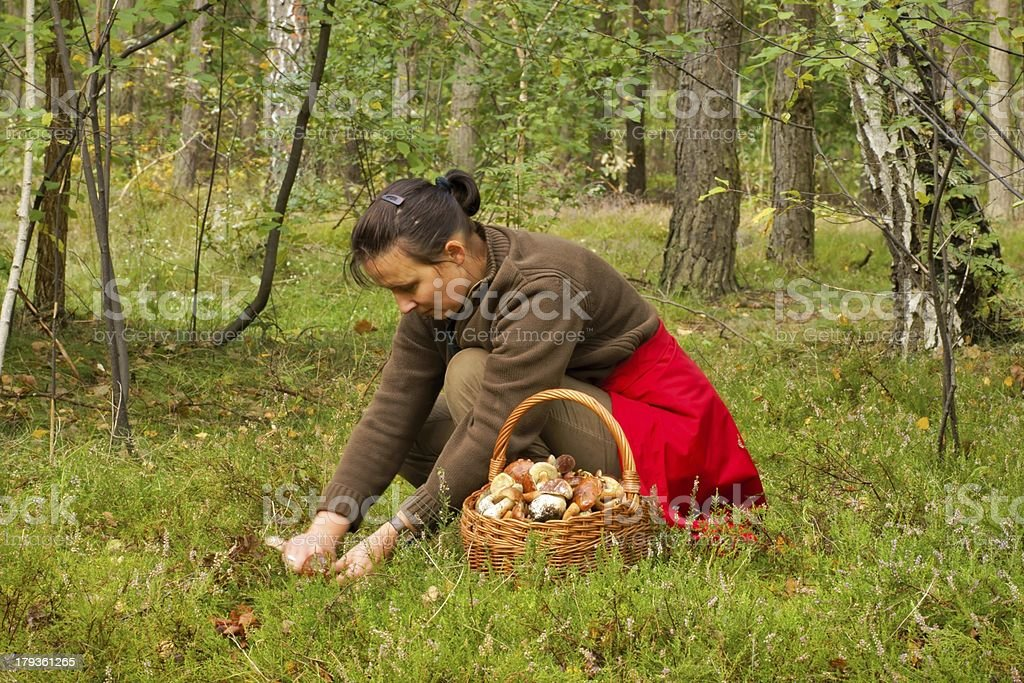 Mushrooming, woman picking mushrooms in the forest royalty-free stock photo