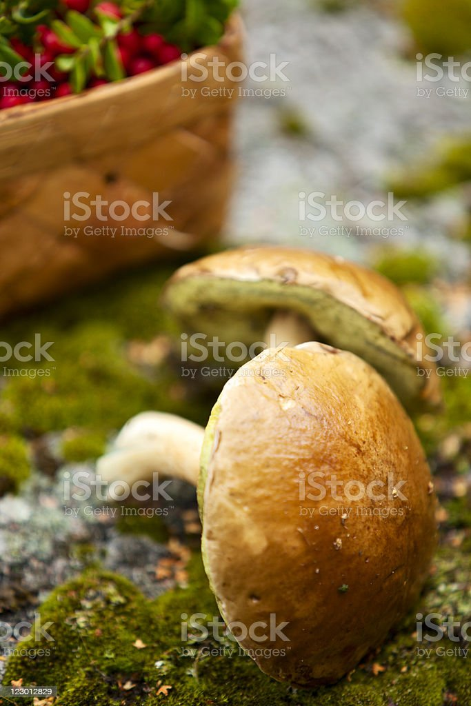 Mushrooms and Basket With Berries  on Background royalty-free stock photo