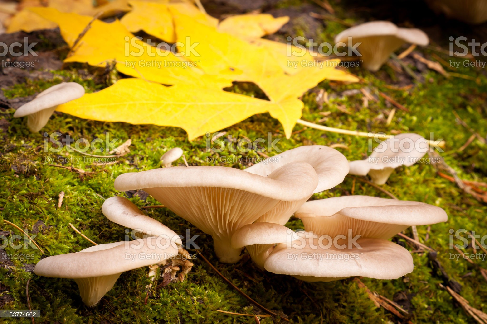 Mushrooms and Leaves royalty-free stock photo