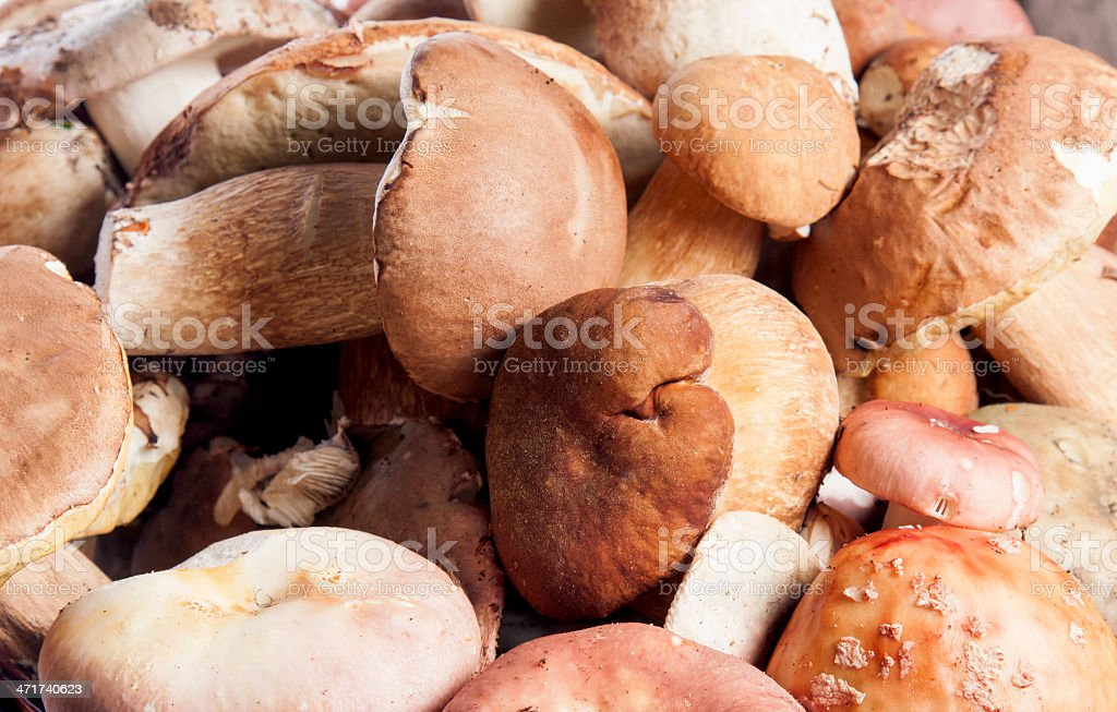 mushrooms as a background royalty-free stock photo