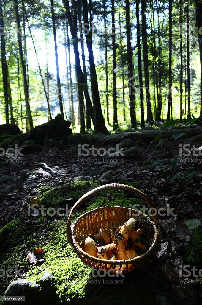Mushrooms basket in the woods royalty-free stock photo