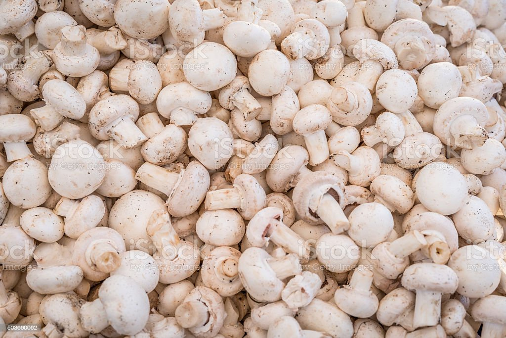 Mushrooms, champignon stock photo