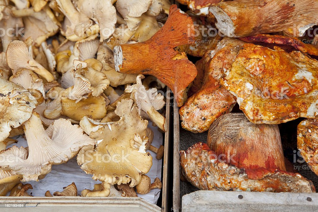 Mushrooms, Chanterelle and Shiitake in Outdoor Market, Food royalty-free stock photo