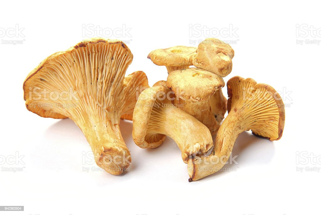 mushrooms chanterelle stock photo