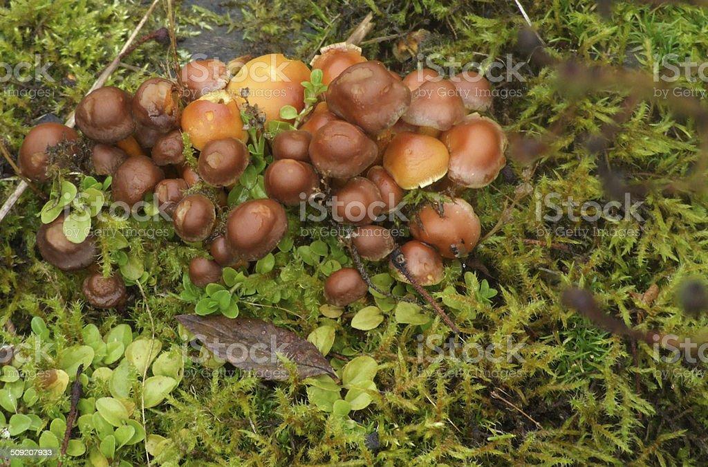 Mushrooms Close-up stock photo