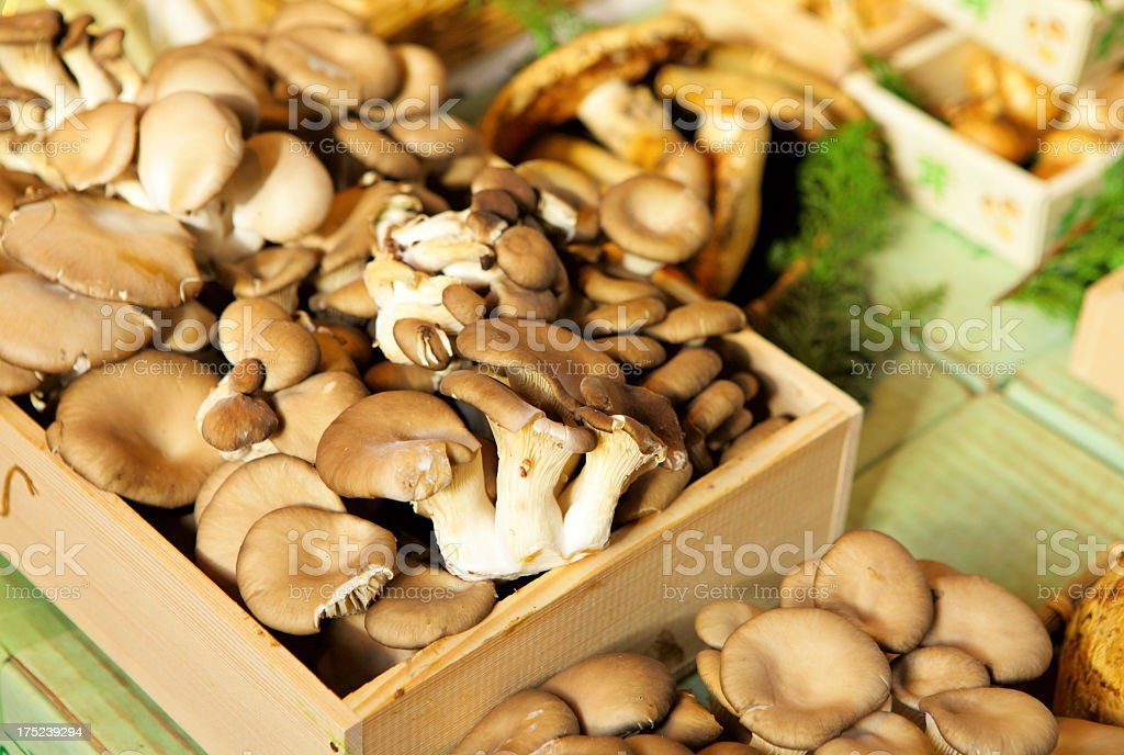 mushrooms for sale in farmers market royalty-free stock photo