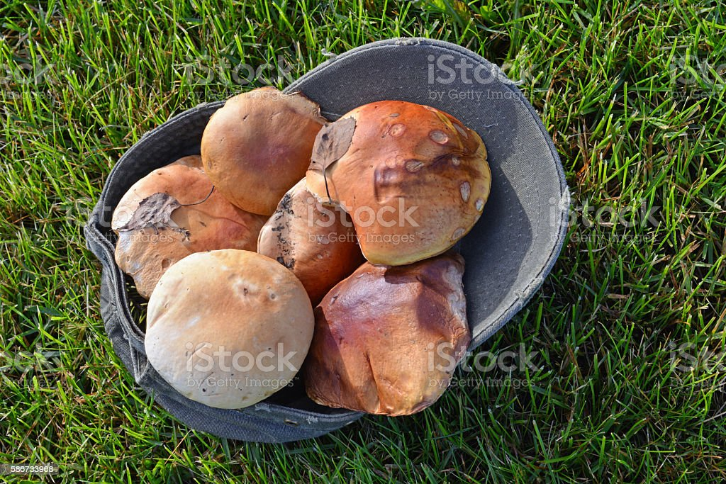 Mushrooms from Alaskan forest stock photo