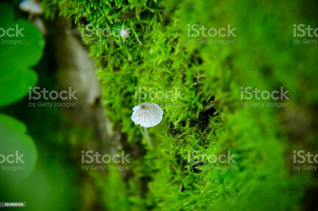 Mushrooms, green moss and periscopes macro background stock photo