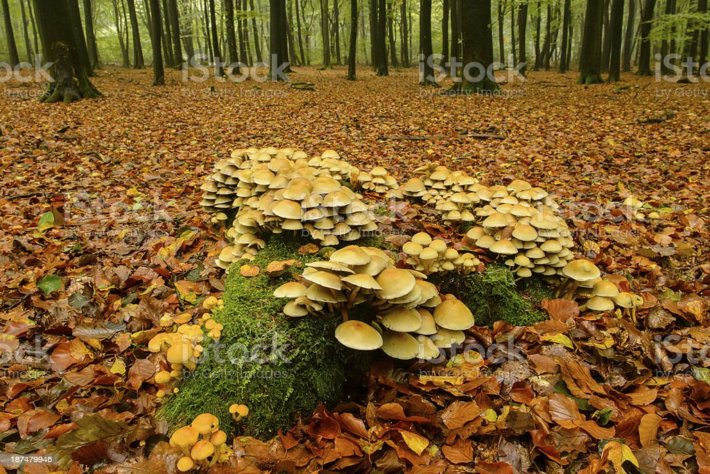 Mushrooms in a forest stock photo