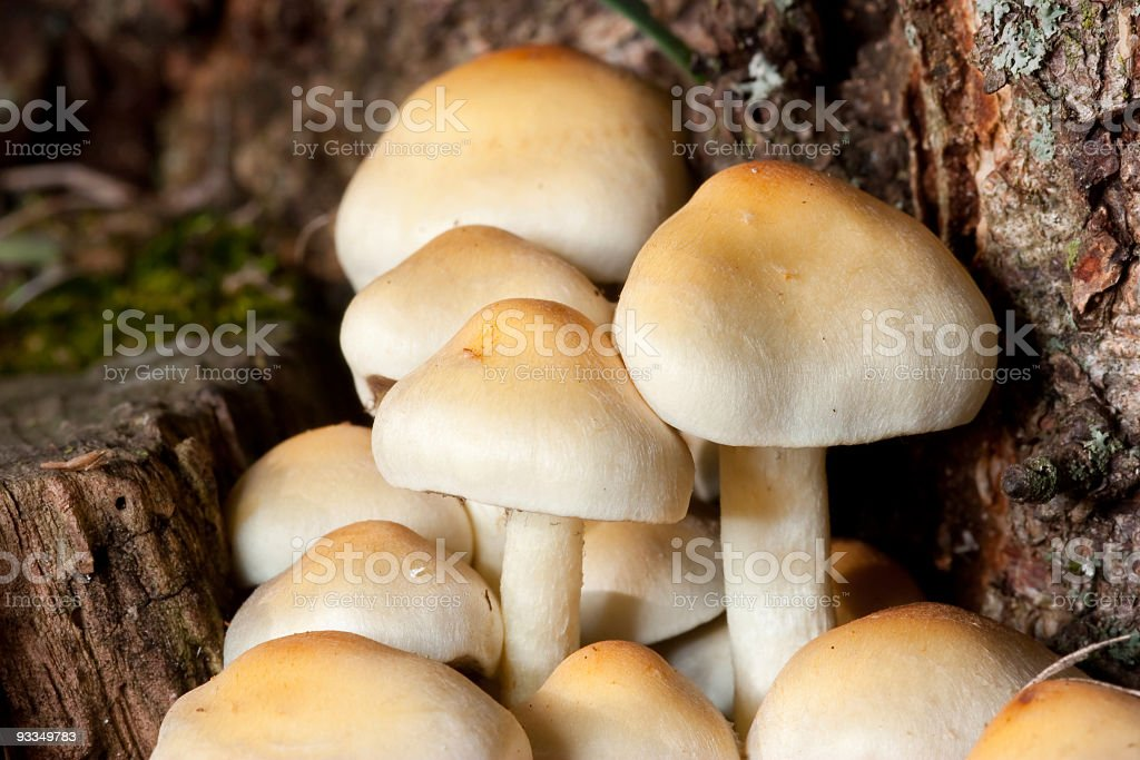 Mushrooms in autum, Switzerland stock photo