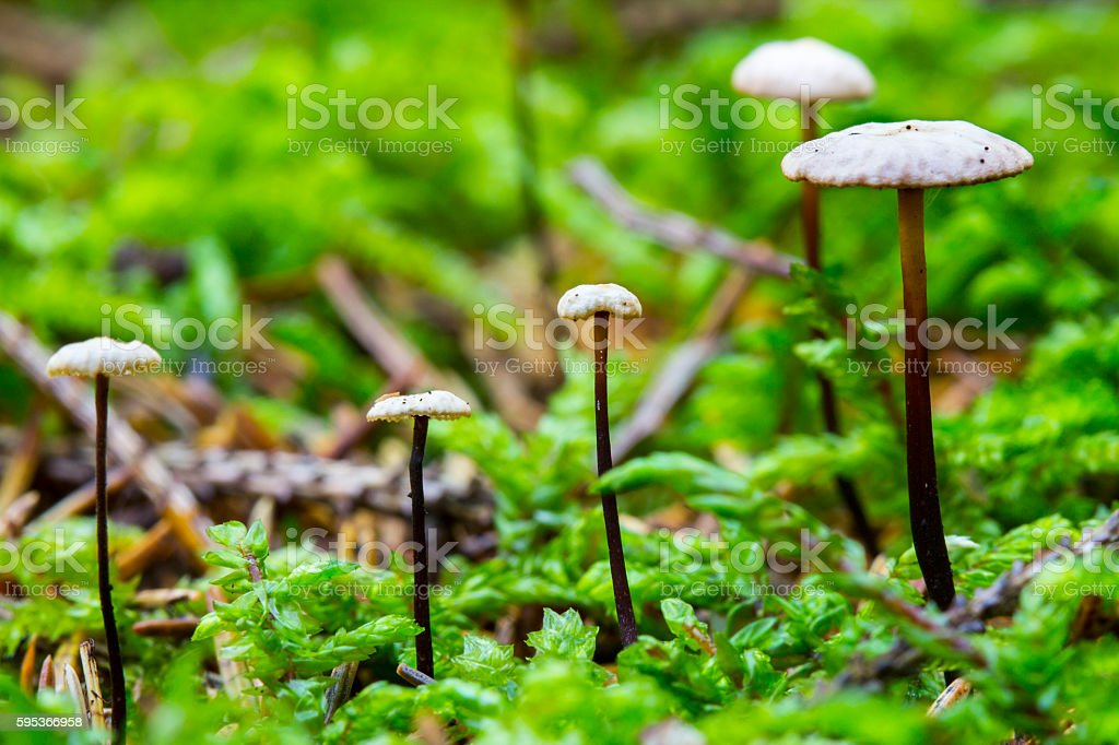 Mushrooms in deep moss forest with green fresh moss stock photo