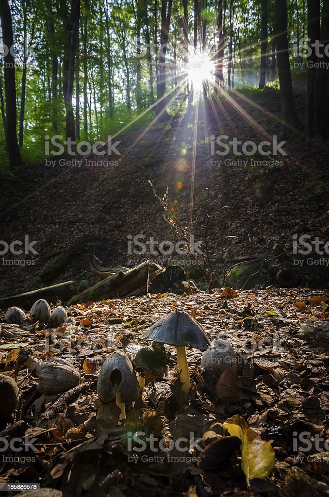 Mushrooms in forest stock photo