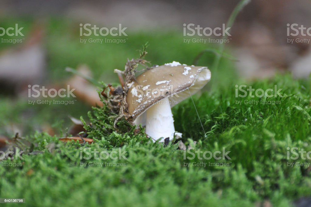 Mushrooms in moss stock photo