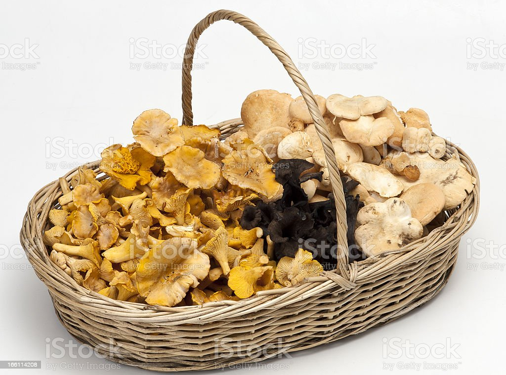 Mushrooms in the basket royalty-free stock photo
