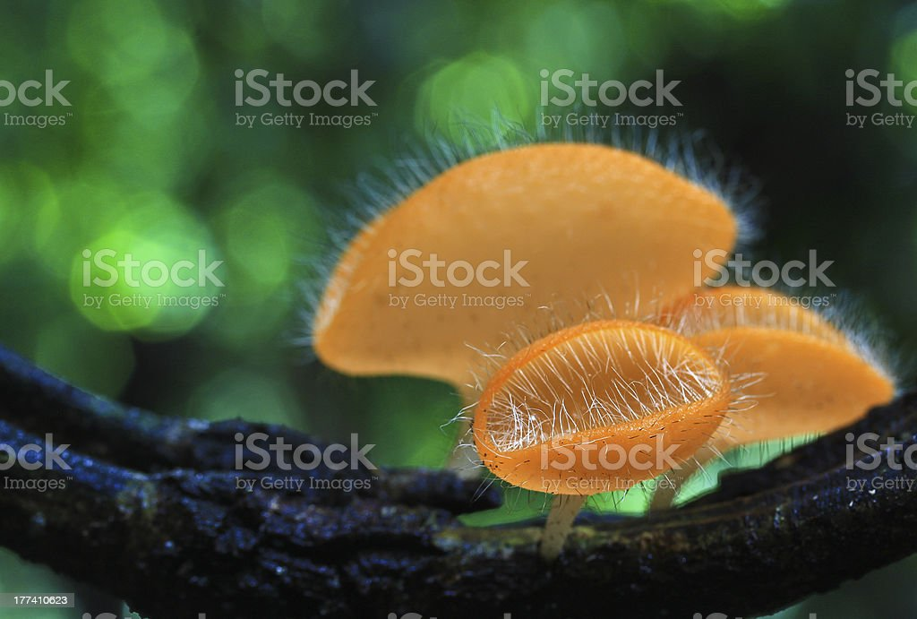 Mushrooms in the forest royalty-free stock photo