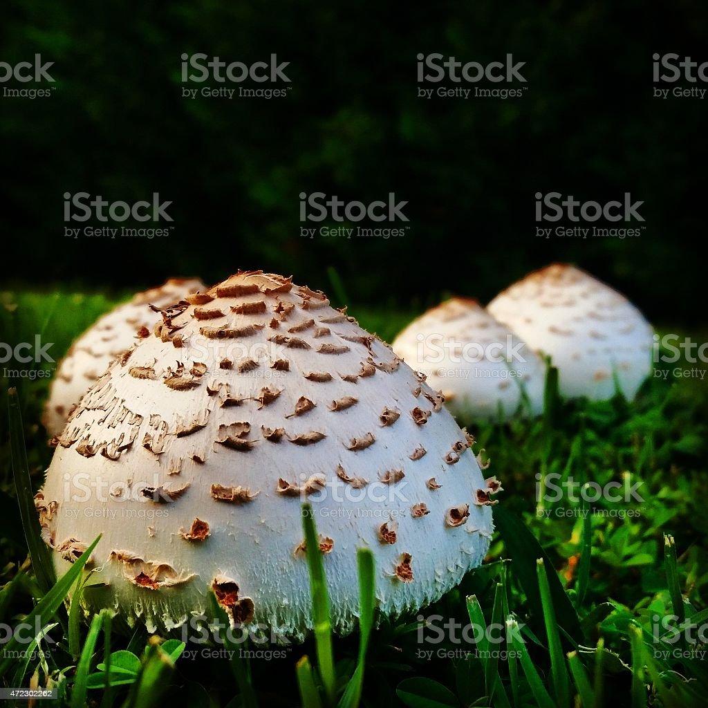 Funghi in erba foto stock royalty-free