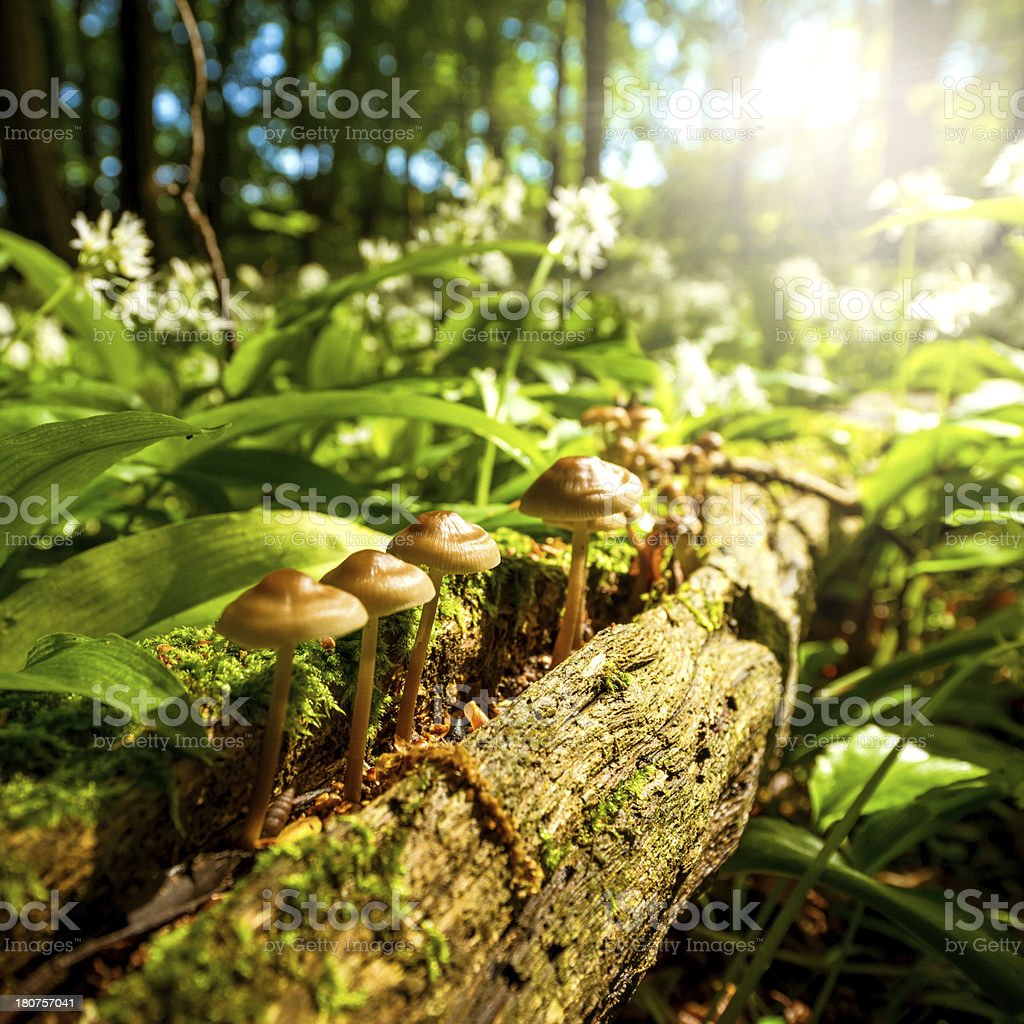mushrooms in the woods on a sunny day stock photo