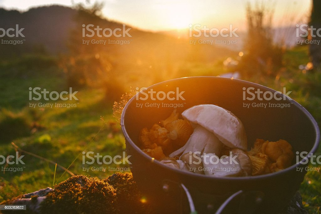 Mushrooms on a background of sunset stock photo