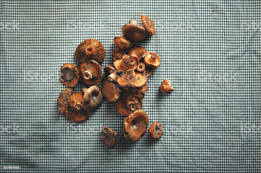 Mushrooms on a blue and white checkered tablecloth stock photo